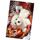 HOMYL Colorful Animal Tiger 5D Diamond DIY Painting Craft Kit Wall Hanging Decor - Dog, 28 x 44cm