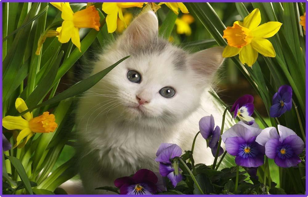 ホワイトKitten Cat withイエロー花 – エッチングビニールStained Glass Film , Static Cling Window Decal 21 in x 33 in B008MT4SJU  21 in x 33 in