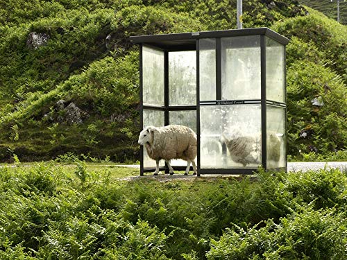 Home Comforts Framed Art for Your Wall Sheep Stop Sun Bus Stop Shelter After The Rain Vivid Imagery 10 x 13 Frame