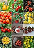Search : David's Garden Seeds Tomato Seed Collection Cherry WQ933V (Multi) 600 Seeds (Open Pollinated, Heirloom, Organic)