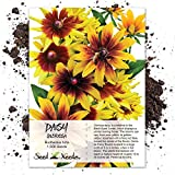 Seed Needs, Gloriosa Daisy (Rudbeckia Gloriosa) 1,500 Seeds