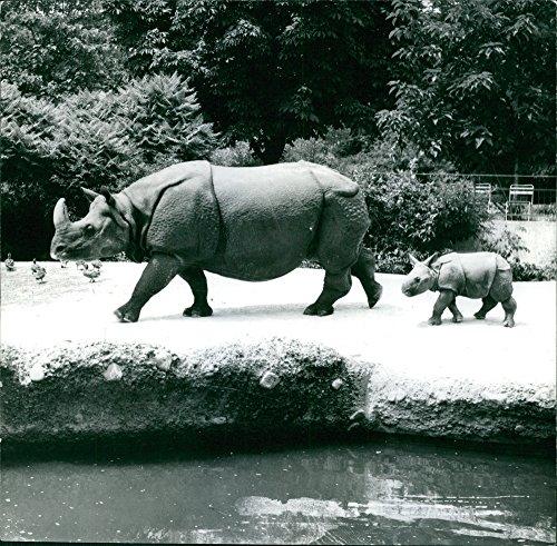 Rhinoceros Photo - 6