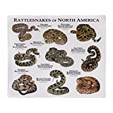 CafePress - Rattlesnakes Of North America - Soft Fleece Throw Blanket, 50''x60'' Stadium Blanket