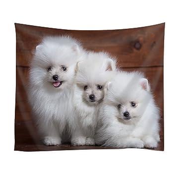Amazon Com Ctenrc Art Design Tapestry Dogs Pomeranians Animal Brown