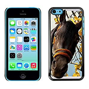 Hot Style Cell Phone PC Hard Case Cover // M00113730 Horse Window Imposing Window Frames // Apple iPhone 5C