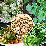 Vanilla Parsley Coriander Seeds Garden Vegetable Seeds 100PCS