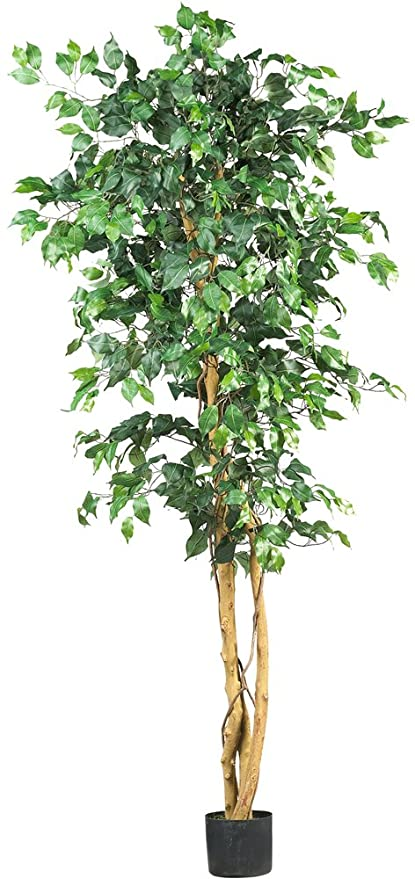 Amazon.com: Nearly Natural 5209 Ficus Silk Tree, 6-Feet, Green: Home ...