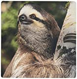 3dRose LLC 8 x 8 x 0.25 Inches Mouse Pad, Three Toed Sloth Wildlife Costa Rica Kevin Schafer (mp_87216_1)