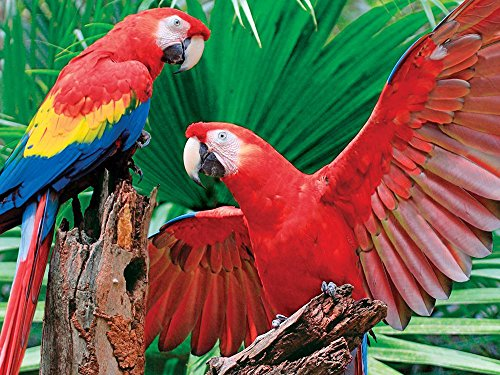 Springbok Puzzles - Scarlet Macaw - 400 Piece Jigsaw Puzzle - Large 26.75 Inches by 20.5 Inches Puzzle - Made in USA - Unique Cut Interlocking Pieces - Big Pieces for Kids & Small Pieces for Adults (Uniquely Piece Cut)