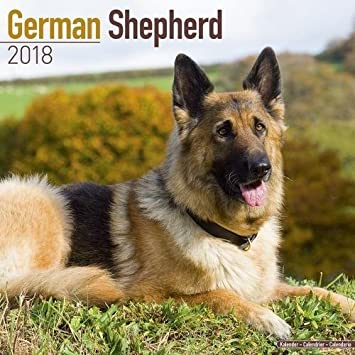 German Shepherd Calendar - Dog Breed Calendars - 2017 - 2018 wall Calendars - 16 Month by Avonside