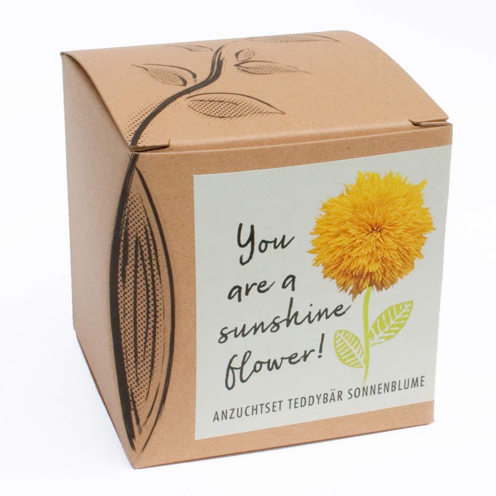 Geschenk-AnzuchtsetSunshine Flower - Teddybär Sonnenblume Naturkraftwerk e. U.