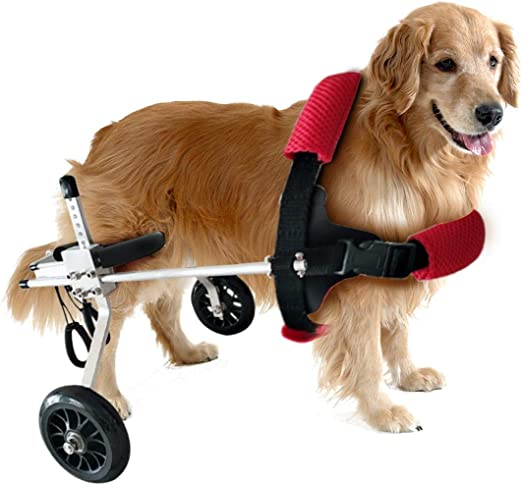 Mascota Perro Silla De Ruedas Discapacitados Perros Rehabilitación ...