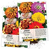 Seed Needs, Zinnia Crazy Mixture (Zinnia elegans) Twin Pack of 250 Seeds Each