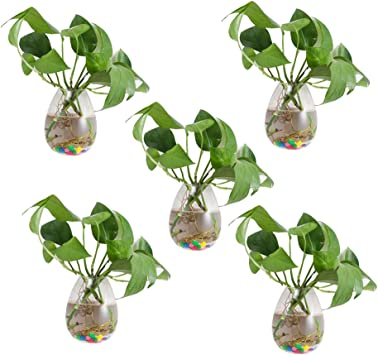 Amazon Com 5 Packs Wall Hanging Planters Glass Plant Pots Water