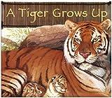 A Tiger Grows Up, Anastasia Suen, 1404818014