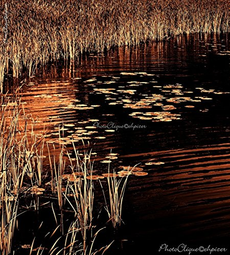 Bronze Cattail (Rushes & Lily Pads / Evocative Waterscape ~ Marshy Setting / Nature / Fine Art Photography Print)