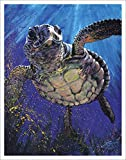 60x80 Blanket Comfort Warmth Soft Plush Throw for Couch Sea Turtle Fine Decorative Animal