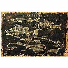 Morris Costumes - Skeleton Fish Canvas W/O Frame