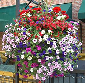 Flower seeds plant hanging petunia seeds balcony -100 seeds