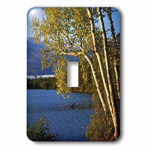 3dRose lsp_189837_1 Usa, New York, Paper Birch Along Fish Creek Pond At Sunset Light Switch ()