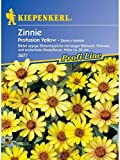 Zinnia elegans Zinnie Profusion Yellow