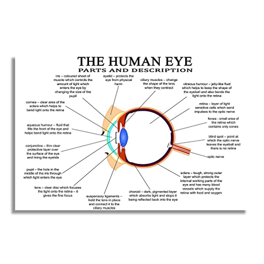 nii the human eye - parts and description education poster and chart for  science and medical students (size: 12x18 inch): amazon in: home & kitchen