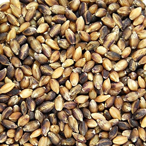 Purple Barley Seeds - Certified Organic - 2.5 Lb Pouch - Handy Pantry Brand - Also Called Black Barley - No Hull - For Barleygrass, Grind for Flour, Food Storage, Soups & More by Handy Pantry (Image #1)