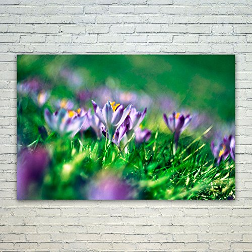 Westlake Art Flower Crocus - 24x36 Poster Print Wall Art - M