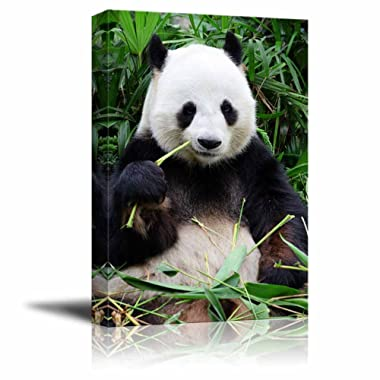 Canvas Prints Wall Art - Giant Panda Eating Bamboo | Modern Wall Decor/Home Decoration Stretched Gallery Canvas Wrap Giclee Print & Ready to Hang - 24  x 16