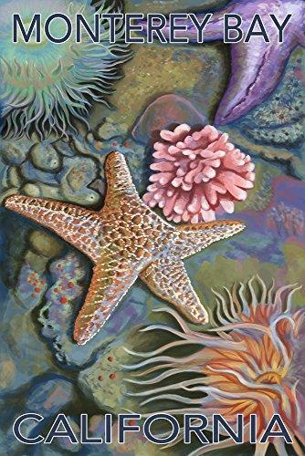 Monterey Bay, California - Tidepool (9x12 Art Print, Wall Decor Travel Poster)