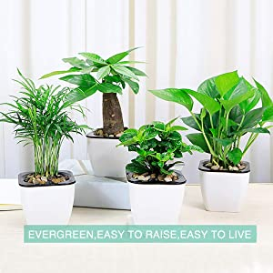 4 Pack Self Watering Planter African Violet Pots White Mini Square Flower Plant Pot with Wick Rope Indoor for Succulent, Flowers, Herbs,All House Plants