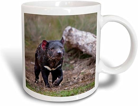 Amazon Com 3drose Tasmanian Devil Wildlife Tasmania Australia Au01 Mzw0086 Martin Zwick Mug 11 Oz Black White Kitchen Dining