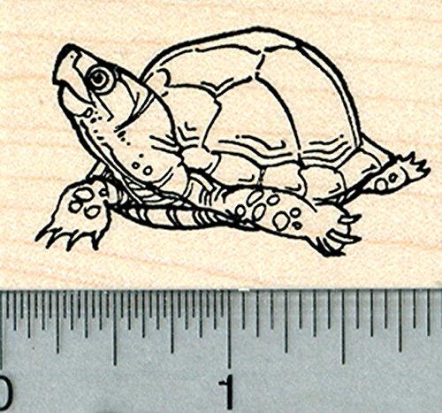 - Turtle Rubber Stamp, Tortoise