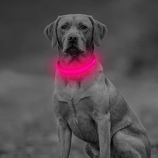 Clan-x LED Dog Collar, USB Rechargeable Glowing Pet Necklace, Mesh Webbing Flashing Light Up Collar, Dog Light for Small Medium Large Dogs(M, Rose Red)