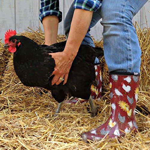 Sloggers Women's Rain & Garden Boots Chicken Daffodil Yellow Barn Red iYaymZYMgv