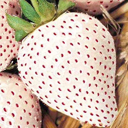 WHITE SOUL STRAWBERRY 100 SEEDS Fragaria vesca Containers Heirloom Non-GMO USA