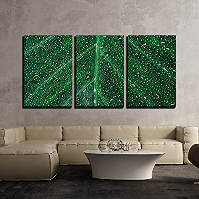 Created Just For You, Gorgeous Visual, Beautiful Green Leaf with Shiny Drops x3 Panels