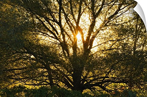 Yves Marcoux Wall Peel Wall Art Print entitled Willow Tree At Sunset, Monteregie Region, Quebec, Canada 60