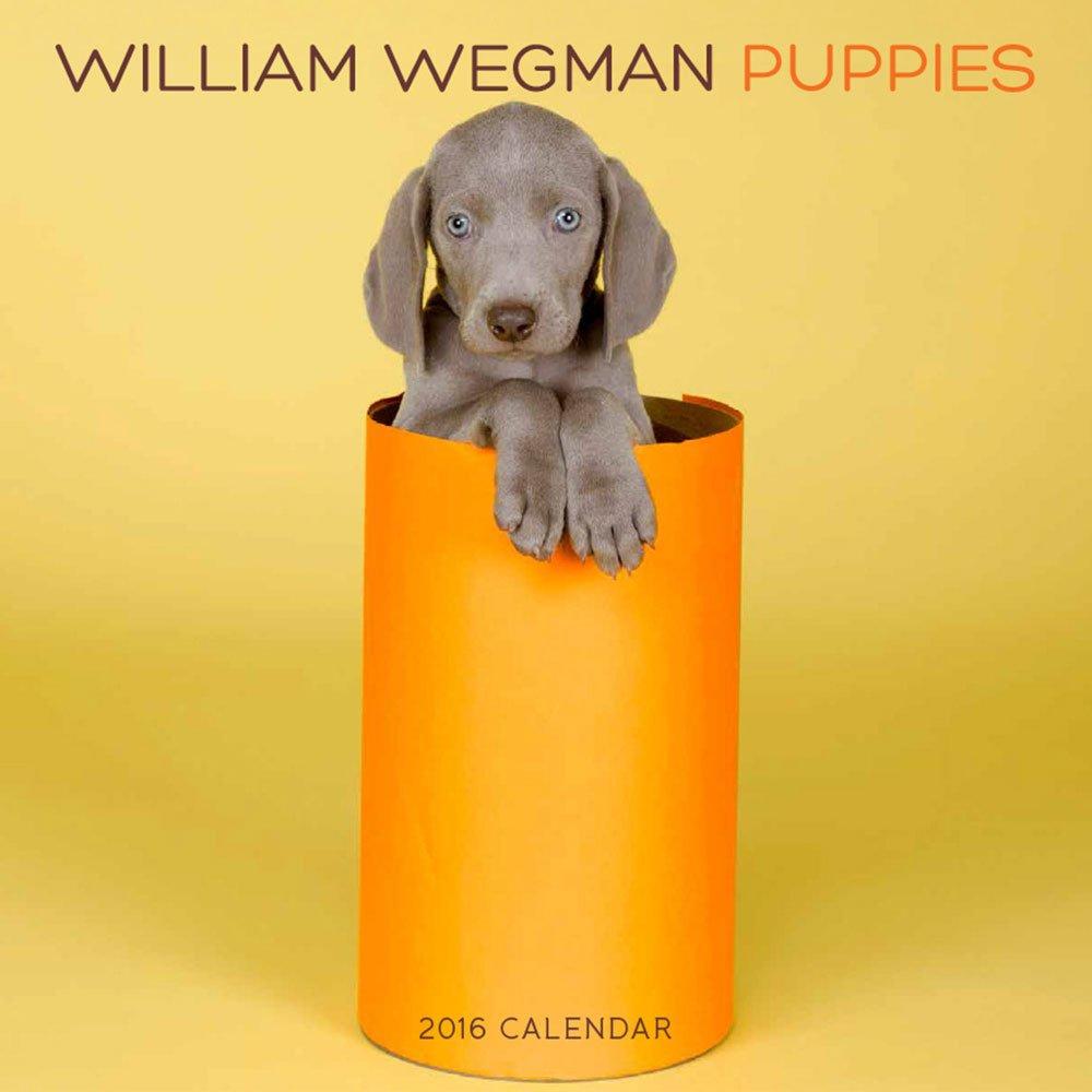 Amazon.com: William Wegman Puppies 2016 Wall Calendar (9781419716102 ...