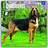 Bloodhounds 2017 Square (Multilingual Edition)