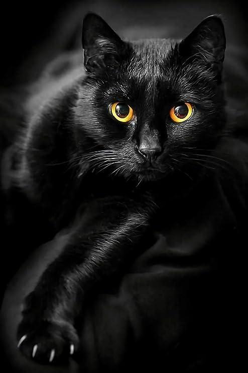 Black Cat, A 1000 Piece Jigsaw Puzzle