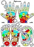 Reflexzonenübersicht - Füße, Hände und Ohr DIN A4 Karte (Lehrtafeln)