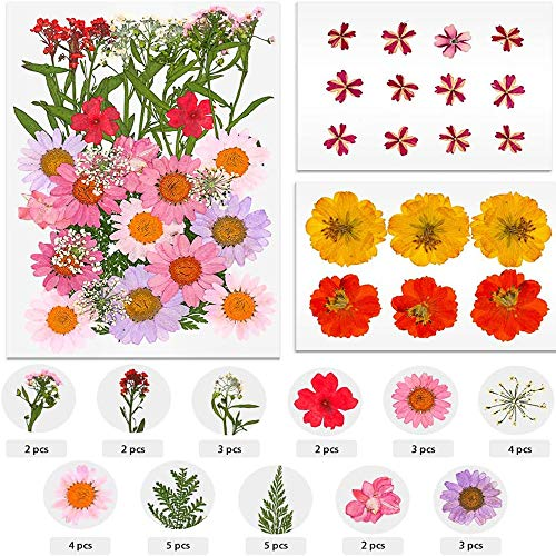 53 PCS Real Dried Pressed Flowers Leaves Mixed Multiple Real Natural Pressed Flowers Assorted Colorful Pressed Flowers Daisies Leaves for DIY Resin Jewelry Nail Pendant Craft Making Art Floral Decors