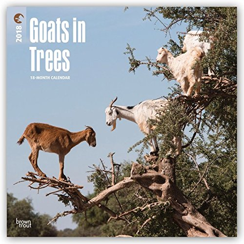Goats in Trees 2018 12 x 12 Inch Monthly Square Wall Calendar, Best Calendar Funny Farm Animals PDF