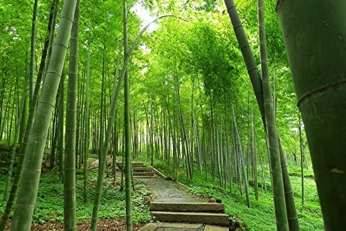 semillas de plantas exóticas semillas Dendrocalamus hamiltonii gigante aglutinación de bambú asiática decoración del jardín de la planta nativa libre 100 PC B35: Amazon.es: Jardín