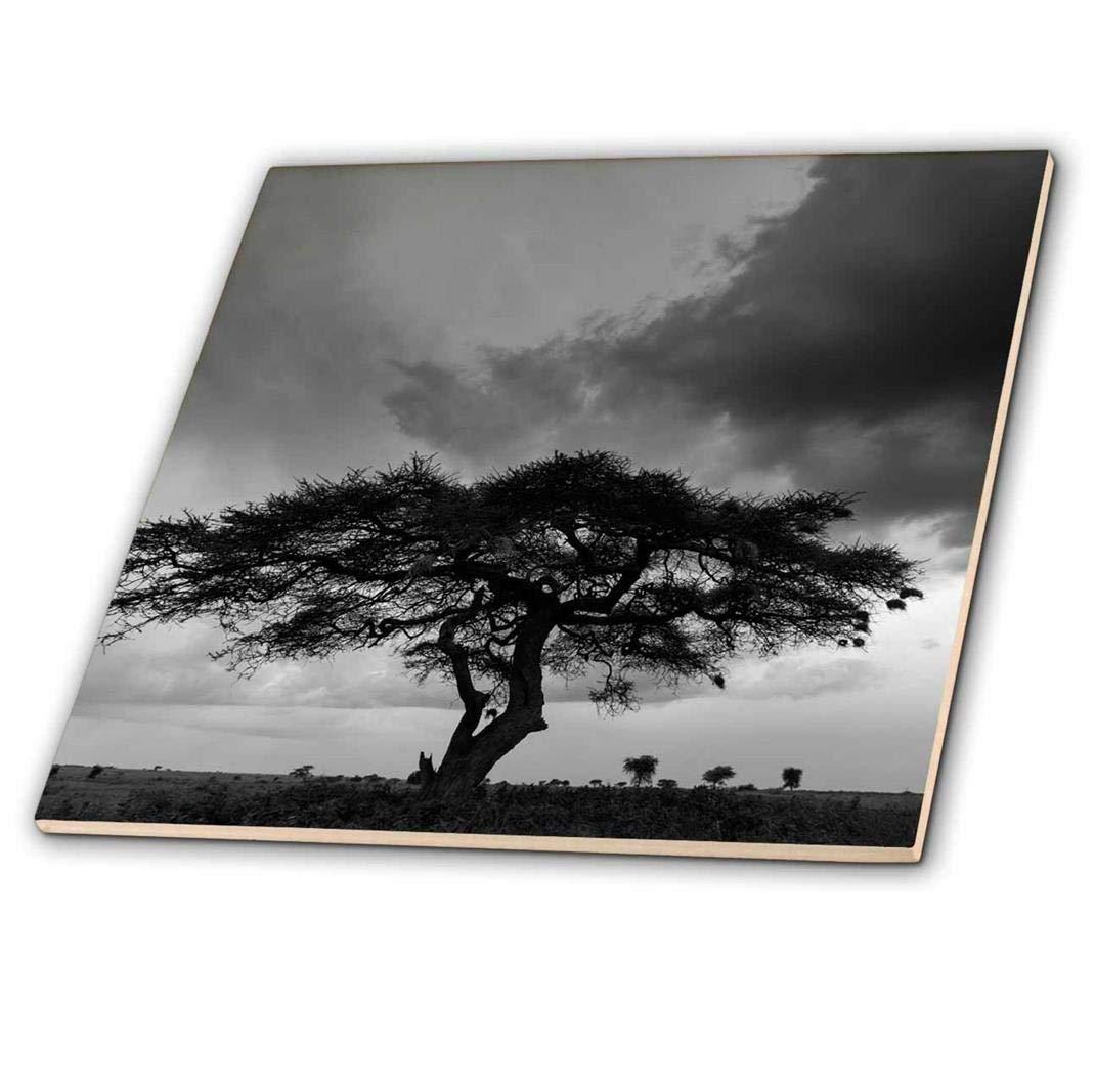 3dRose ct_187261_1 Acacia Tree Serengeti NP Tanzania Ceramic Tile