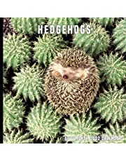 Hedgehogs: 16 Month Calendar With Many Colorful Photos - Runs from September 2021 Through December 2022 . Size 8.5 x 8.5 Inches.