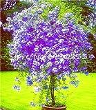 Kasuki 100 Pcs Plumbago Auriculata Bonsai Exotic Perennial Flowers Bonsai Home Garden Decor Plant Ceratostigma Plumbaginoides Bonsai - (Color: f)