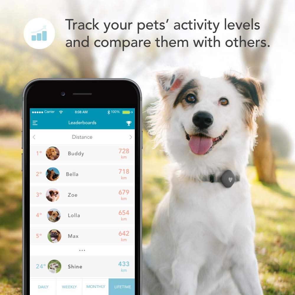 Findster Duo+ Pet Tracker Free of Monthly Fees - GPS Tracking Collar for Dogs and Cats & Pet Activity Monitor - Tracks 2 Pets by Findster (Image #4)