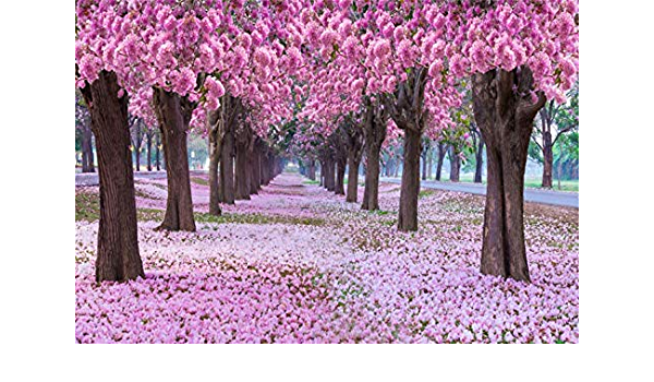 Multiple Sizes Available Backdrop Pink Cherry Blossom Trees Background Drop Photo Booth Photo Prop